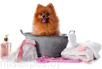 Dogs_Jewelry_Towel_White_background_Spitz_Bathroom_531022_5000x3185